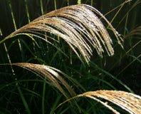 трава возглавляет семя высокорослое стоковая фотография