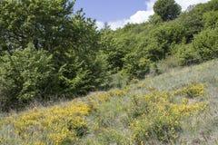 Трава во время весны вполне детальных желтых цветков и деревьев внутри Стоковая Фотография