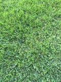 Трава всегда зелене в Флориде 2 Стоковое Изображение