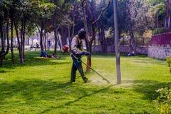 Трава вырезывания садовника Стоковое Изображение