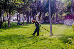 Трава вырезывания садовника Стоковые Фото