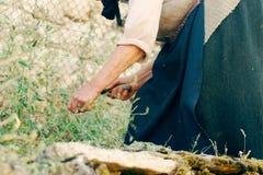 Трава вырезывания старухи с серпом Стоковое Изображение