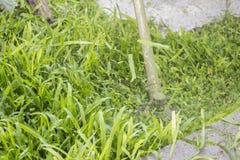 Трава вырезывания с травокосилкой Стоковое Фото