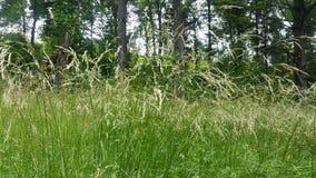 трава высокорослая стоковое фото
