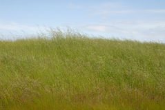 трава высокорослая Стоковые Фото