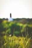 трава высокорослая Стоковые Изображения