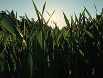 трава высокорослая стоковое изображение rf