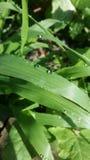 трава влажная Стоковые Изображения RF