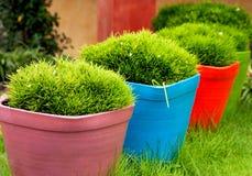 Трава в баках стоковые изображения rf