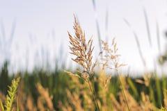 Трава в болоте стоковые фотографии rf