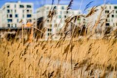Трава в венском парке стоковая фотография rf