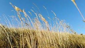 Трава в ветре