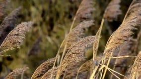 Трава в ветре Стоковые Изображения RF