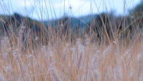Трава в движении акции видеоматериалы