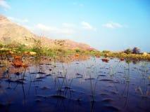 Трава в воде Стоковые Фотографии RF
