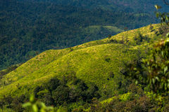Трава в горе Стоковая Фотография