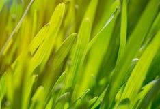 Трава в желтом солнечном свете лето предпосылки Стоковое Изображение RF