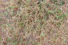 трава в засухе Стоковые Изображения RF