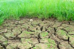 Трава в засушливых почвах Стоковые Изображения RF