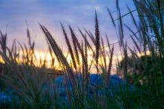 Трава в заходе солнца Стоковое Изображение