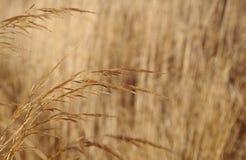 Трава в зиме Стоковые Изображения RF