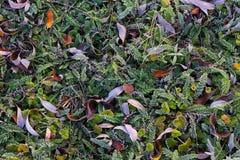Трава в изморози Стоковая Фотография