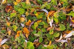 Трава в изморози Стоковое фото RF