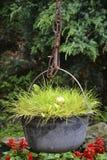 Трава в котле Стоковое Изображение