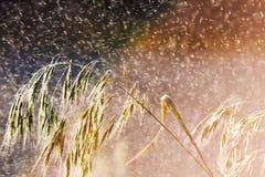 Трава в дожде Стоковое Фото