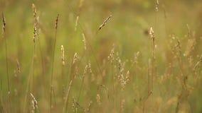 Трава в осени сток-видео