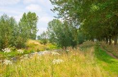 Трава вдоль дерева выровняла луг в лете Стоковое Изображение