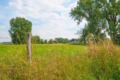 Трава вдоль дерева выровняла луг в лете Стоковые Фотографии RF