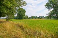 Трава вдоль дерева выровняла луг в лете Стоковое Изображение RF