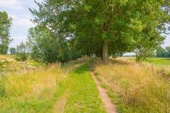 Трава вдоль дерева выровняла луг в лете Стоковые Фото