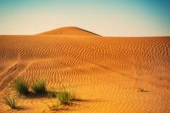 Трава в песчанных дюнах Стоковая Фотография