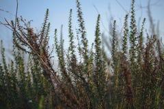 Трава в поле с солнечными лучами Запачканная предпосылка лета, sel Стоковая Фотография RF