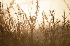 Трава в поле с солнечными лучами Запачканная предпосылка лета, sel Стоковые Изображения RF