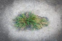 Трава в поле цемента Стоковое фото RF