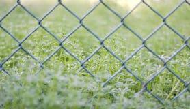 Трава в саде Стоковое фото RF