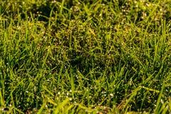 Трава в свете солнца утра Стоковые Изображения RF