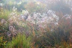 Трава в светящей росе Стоковые Фото
