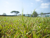 Трава в Сингапуре стоковое фото rf