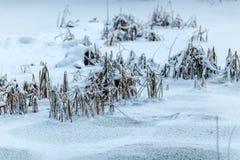 Трава в снеге во время дня Стоковая Фотография RF