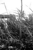 Трава в солнце стоковая фотография rf