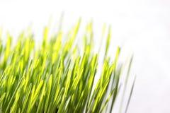 Трава весны Стоковые Фото