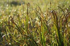 Трава в солнечном свете Стоковое Фото
