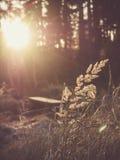 Трава в солнечности Стоковые Фото