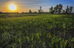 Трава в солнце Стоковое Изображение RF