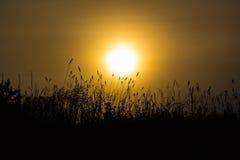 Трава в туманном рассвете Стоковые Изображения RF