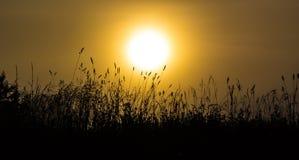 Трава в туманном рассвете Стоковое Изображение